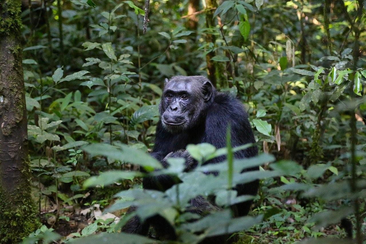 Emile Ouosso parle des associations protectrices de la faune au Congo